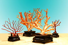 Coral branches Stock Image