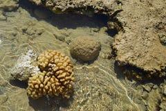 Coral branco Cena subaquática tranquilo com espaço da cópia foto de stock
