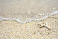 Coral broken and dead on the beach. Royalty Free Stock Images
