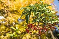 Coral bush tree Royalty Free Stock Photo