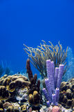 Coral in the Caribbean Stock Photo