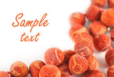 Coral chaplet. The coral chaplet on white background with copy space Royalty Free Stock Images