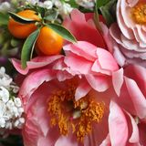 Coral Charm Peony and Kumquats in a Bouquet. Close-up of flowers and fruits in a cheerful, bright spring wedding bouquet stock image