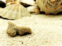 Coral closeup on sand summer beach season sunny closeup concept with shell. Background Royalty Free Stock Photo