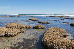 Coral Coast: Blau durchlöchert Meerblick Lizenzfreie Stockfotografie