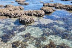 Coral Coast : Trous bleus, Australie occidentale Image stock