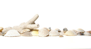 Coral and cockleshells. On white stock photography