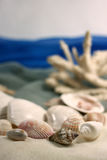 Coral and cockleshells. Beach and the sea from silk of a sink of Royalty Free Stock Image