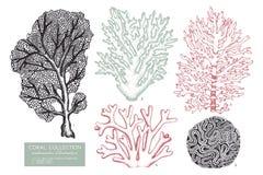 Vector collection of hand drawn reef corals sketch.Vintage set underwater natural elements. Vintage sealife illustration on white. Background vector illustration