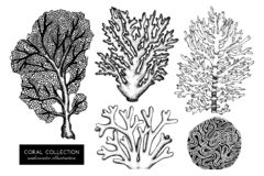 Vector collection of hand drawn reef corals sketch.Vintage set underwater natural elements. Vintage sealife illustration on white. Background stock illustration
