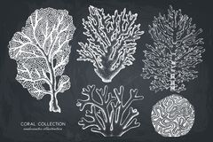 Vector collection of hand drawn reef corals sketch.Vintage set underwater natural elements. Vintage sealife illustration. stock illustration