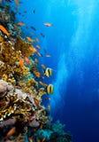 Coral colony Stock Photo