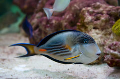 Coral colony Stock Photos