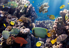 Coral colony and coral fish Stock Photos