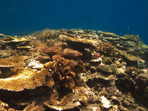 Coral Colony on Great Barrier Reef Australia Stock Images