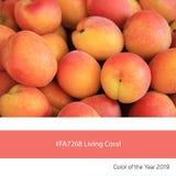 Coral Color de vida do ano, abricós frescos imagens de stock