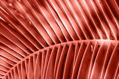 Tropical palm leaves background in coral color. Coral color tropical palm leaves background. Floral pattern.Trendy background royalty free stock photography