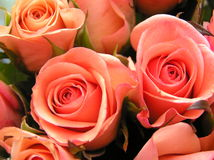 Coral colored roses. Photograph of a display with coral colored (not very common!)roses Stock Photography