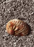 Shell Isolated on Black And white Sand Background royalty free stock photos