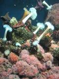Coral colorido Foto de archivo libre de regalías