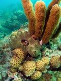 Coral con la cara del dragón Imagen de archivo
