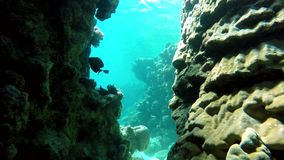 Coral,The corals and fish. Coral reef. Exotic fishes. The beauty of the underwater world. Life in the ocean. Diving on a tropical reef. Submarine life. Clear stock footage