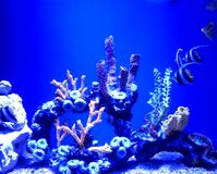 Coral. S and fishes Royalty Free Stock Photography