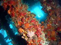 Coral da destruição imagem de stock royalty free