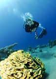 Coral da folha e mergulhador de mergulhador Fotografia de Stock Royalty Free