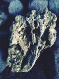 Coral dado forma coração foto de stock royalty free