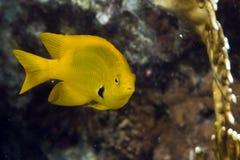 Coral and damselfish Stock Image
