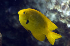 Coral and damselfish. Taken in the red sea Royalty Free Stock Images