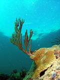Coral de cérebro e mar Rod Imagens de Stock Royalty Free