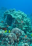 Coral de cogumelo fotografia de stock