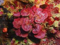 Coral de piedra Fotografía de archivo