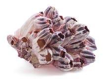 Coral decorativo natural del fondo del mar aislado en el fondo blanco fotografía de archivo
