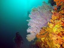 Coral del buceador y del fan de mar Fotografía de archivo libre de regalías