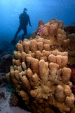 Coral and scuba diver underwater Stock Photography