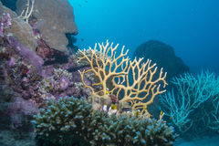 Coral Diversity Fotografia de Stock