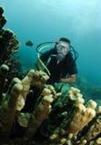 Coral do órgão e mergulhador de mergulhador imagem de stock royalty free