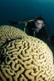 Coral do órgão e mergulhador de mergulhador Imagens de Stock