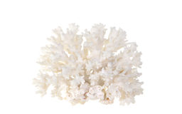 Coral do mar fotografia de stock royalty free