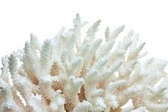 Coral do mar fotografia de stock