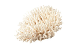 Coral do mar foto de stock