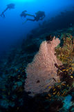 Coral do mergulhador e do Gorgone imagem de stock