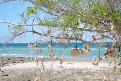 Coral e árvore Imagens de Stock