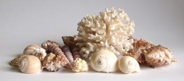 Coral e escudos foto de stock