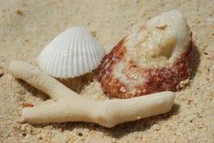 Coral e escudos na areia na costa imagem de stock royalty free