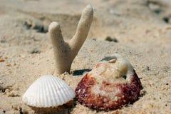 Coral e escudos na areia na costa imagens de stock