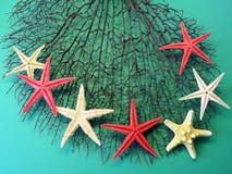 Coral e estrelas do mar pretos Fotos de Stock